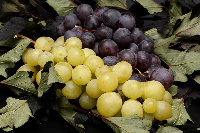grapes-2792730_1920