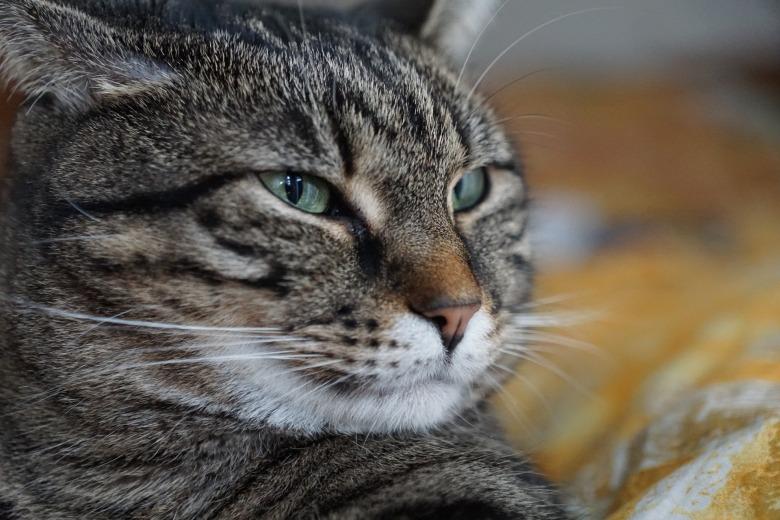 cat-3134990_1920