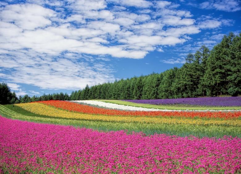 flower-garden-250016_1920