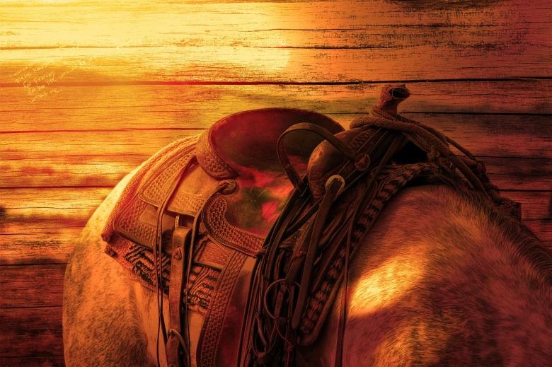 horses-back-587609_1280