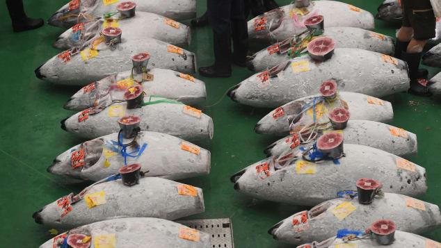 http---cdn.cnn.com-cnnnext-dam-assets-181011133902-toyosu-fish-market