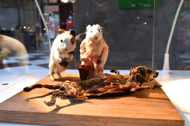 0_Guinea-pigs-served-as-a-traditional-Peruvian-Andes-food-are-displayed-at-the-Disgusting-Food-Museu