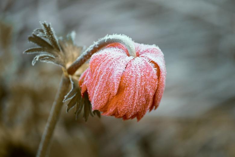 frozen-3840163_1920