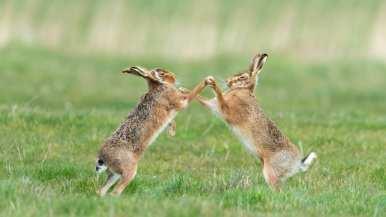 http---cdn.cnn.com-cnnnext-dam-assets-190913153741-comedy-wildlife-photography-awards-3