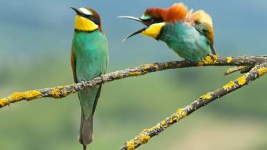 http---cdn.cnn.com-cnnnext-dam-assets-190913153747-comedy-wildlife-photography-awards-4