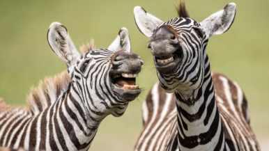 http---cdn.cnn.com-cnnnext-dam-assets-190913153751-comedy-wildlife-photography-awards-5
