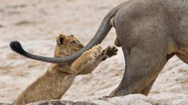 http---cdn.cnn.com-cnnnext-dam-assets-190913153756-comedy-wildlife-photography-awards-9