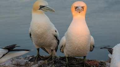 http---cdn.cnn.com-cnnnext-dam-assets-190913153759-comedy-wildlife-photography-awards-11