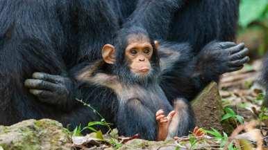 http---cdn.cnn.com-cnnnext-dam-assets-190913154511-comedy-wildlife-photography-awards-13